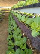 河北盐山县一农业合作社被指冒用资料申报省级现代果蔬