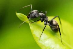 昆虫视觉功能五亿年前或已形成