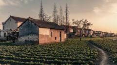 城镇户籍子女可继承农村宅基地使用权